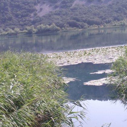 Nenúfares en La Laguna Grande